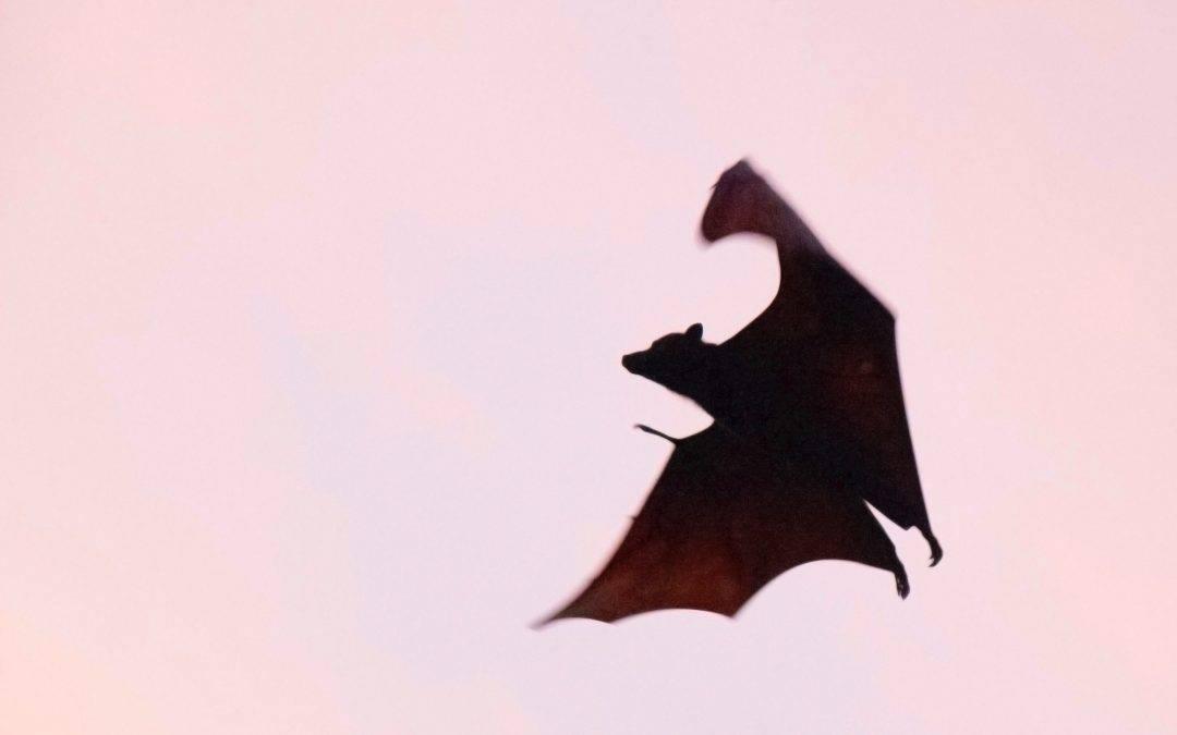 Vampirismo e adolescenza, uno sguardo psicoanalitico